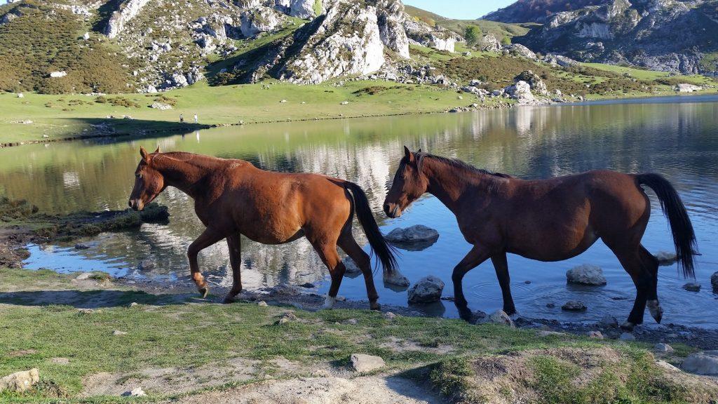 Подъем к горным озерам парка Пики Европы