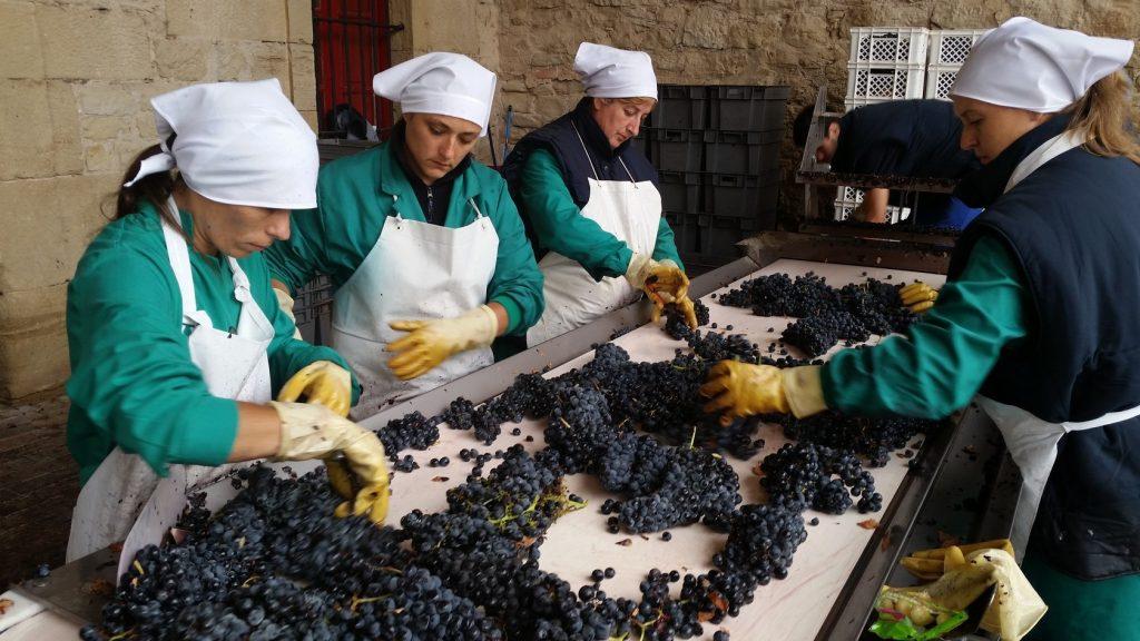 Винный туризм в винодельню Маркиз де Рискаль