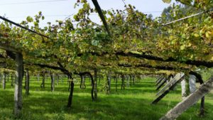 Винодельни севера Испании