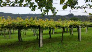 Знакомство с виноделием севера Испании