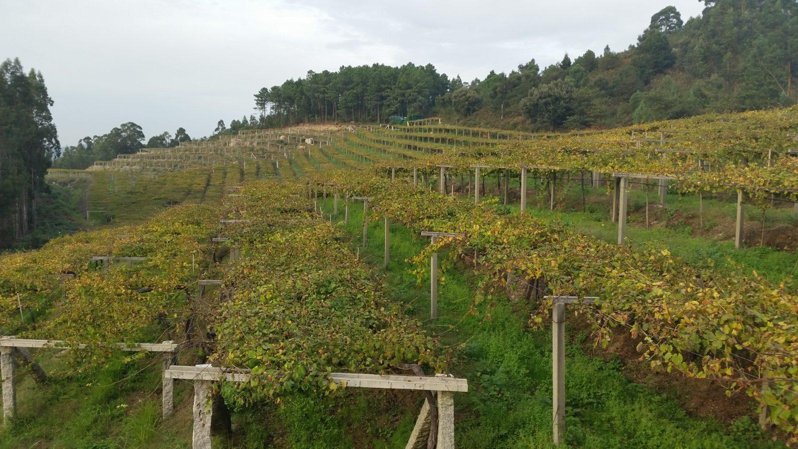 экскурсии в винодельни севера Испании