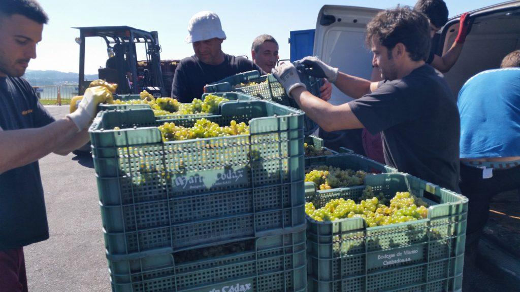 Посещение лучших винных предприятий Галисии