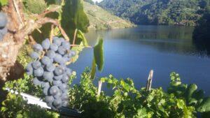 Экскурсии по винным регионам Галисии