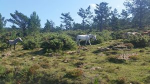 Живописные места севера Испании