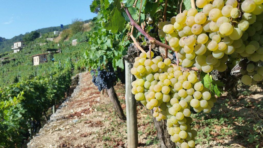 Посещение зоны виноделия Рибейры Сакры