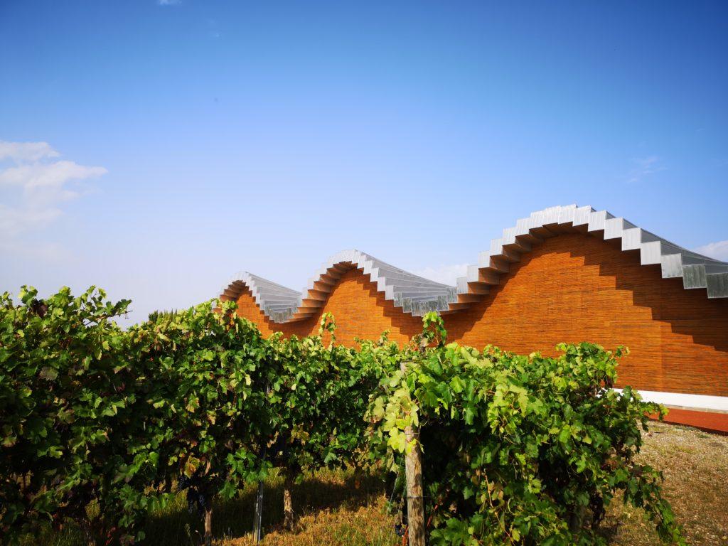Знакомство с виноделием и архитектурой Риохи