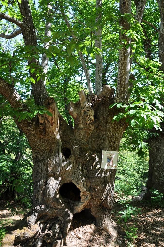 Природные места под охраной ЮНЕСКО