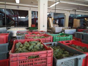 Посещение цехов винодельни Абадия