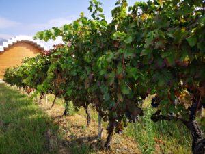 Экскурсии на виноградники Исиос