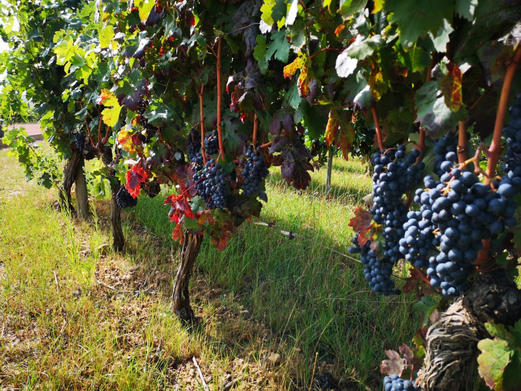 Знакомство с требованиями виноделия Риохи