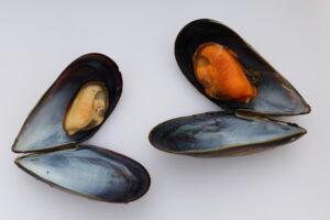 знакомство с морепродуктами Галисии
