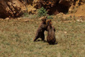 Поездки с детьми в зоопарки Кантабрии