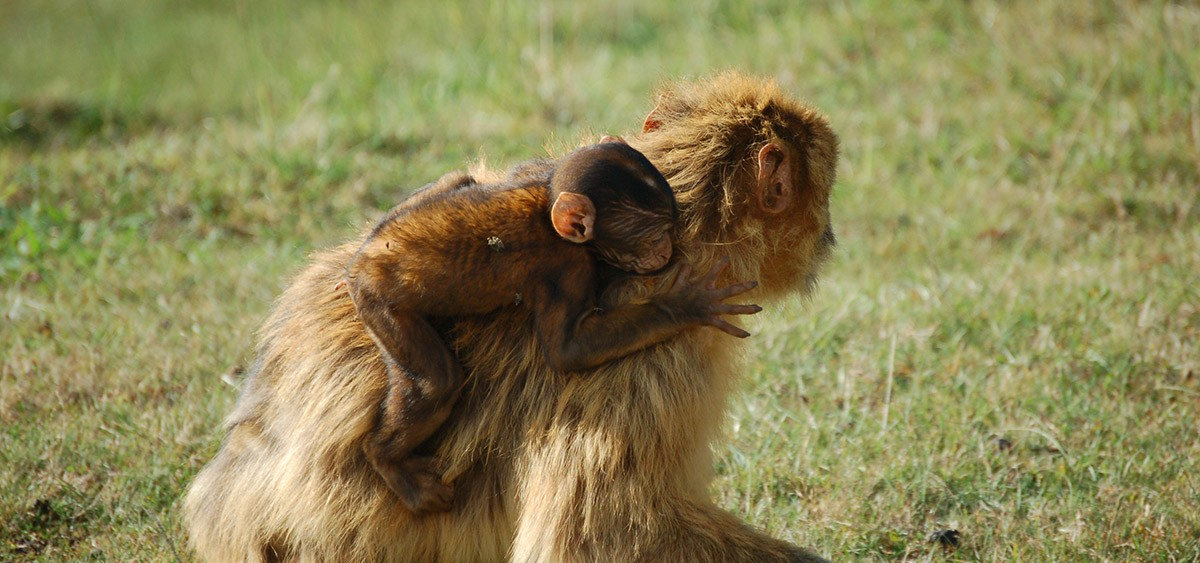 Организованные экскурсии в зоопарки на севере Испании