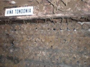 Дегустации винтажей вин Тондония