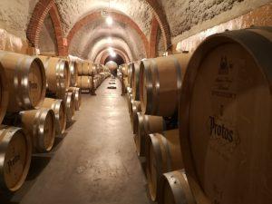 Ознакомление с ферментацией вин Протос