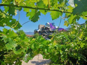 Экскурсии на виноградники Риохи
