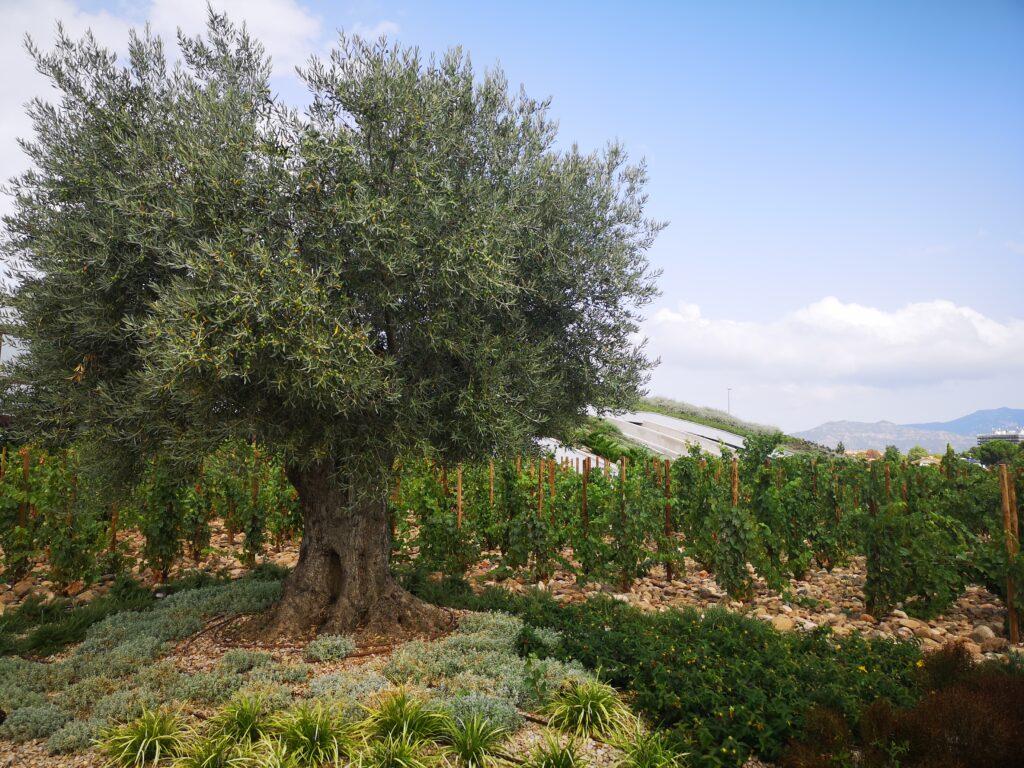 Экскурсии на виноградники Рамон Бильбао