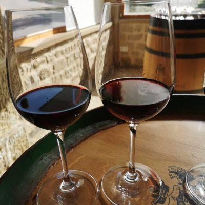 экскурсия в винодельню Маркиз де Рискаль